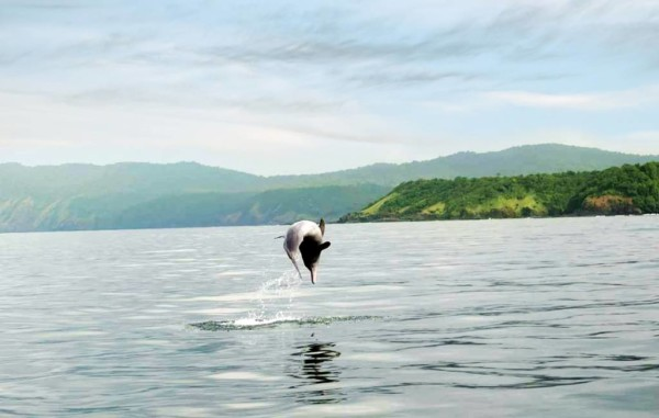 dolphin-show-near-grand-island-goa
