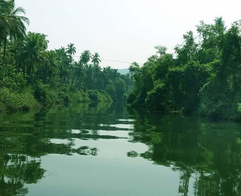 Chapora River Houseboat Goa